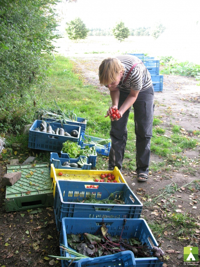 groenten-te-koop